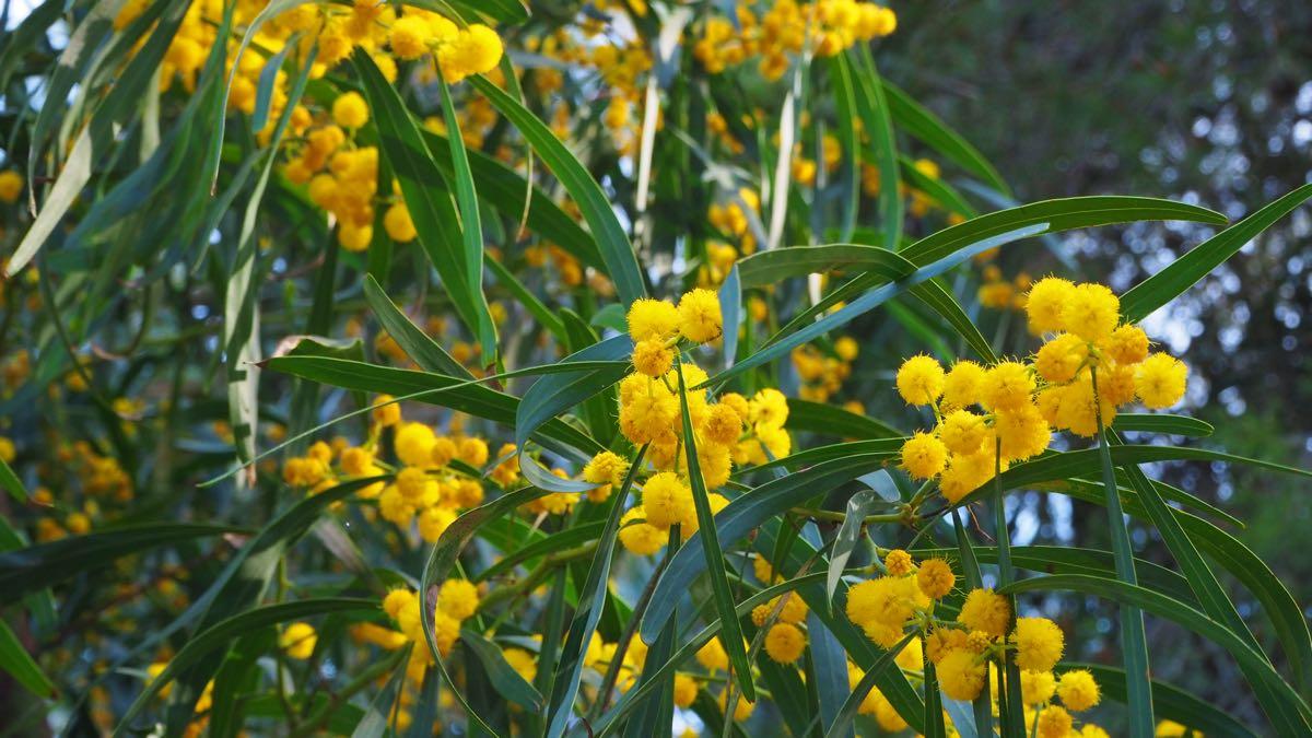 Ostern Blüten Mallorca Flowers